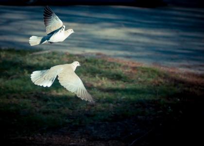 Flyga - Fotosondag 140420