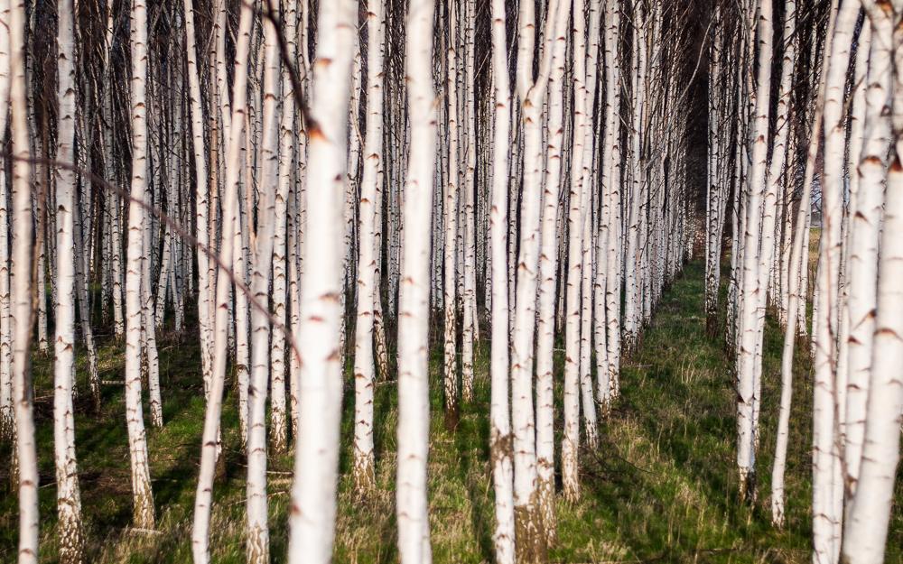 270. Skog (112 av 365)