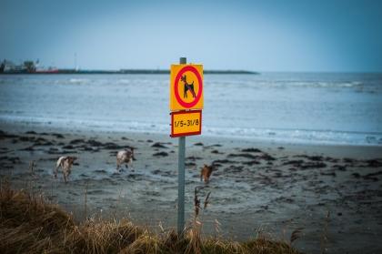 Strandskylt mot hundar