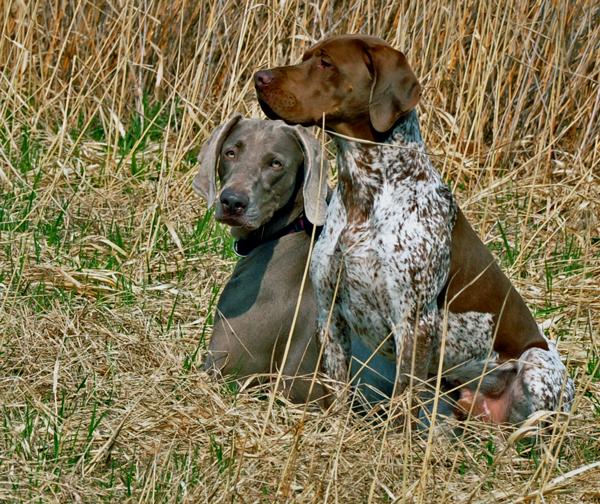 Tränar med hundar