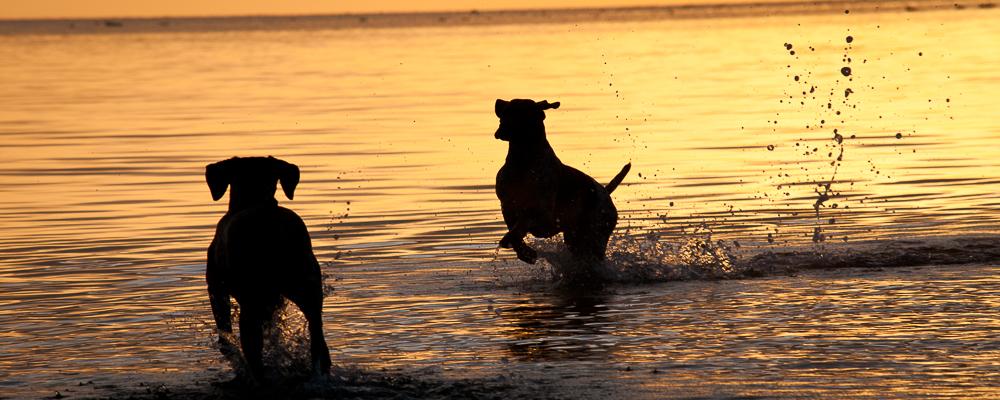 Hund & Jakt