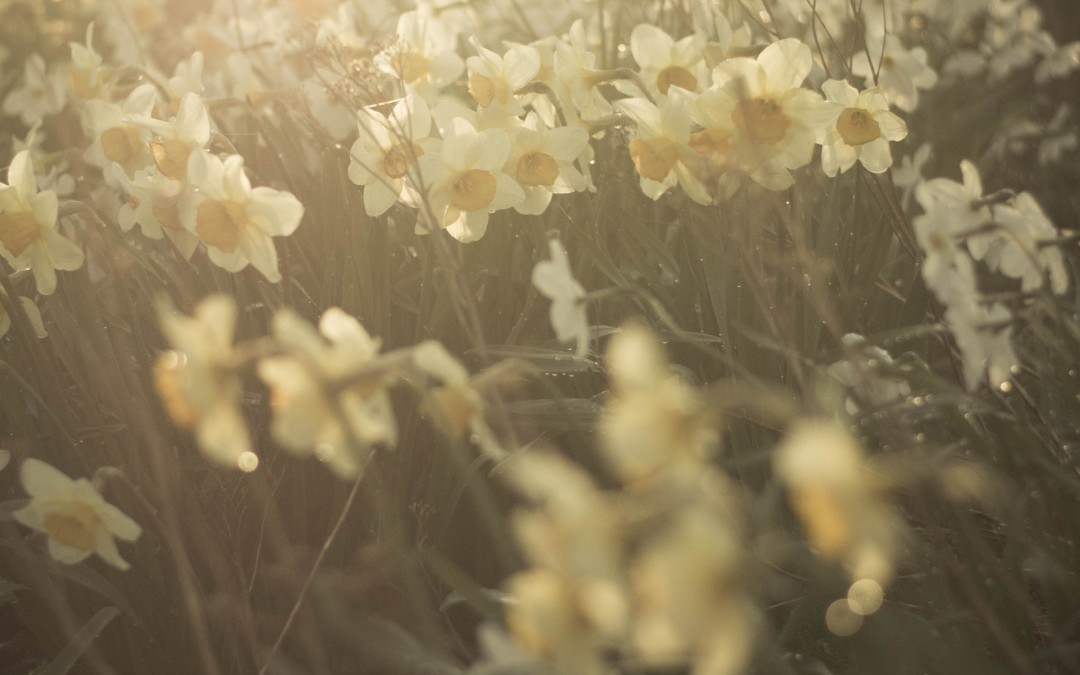 Detaljer, violer och fotosöndag