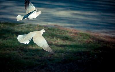 Fotosöndag tema Flyga